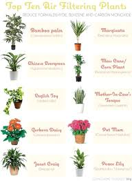 house plants low light cursosfpo info wp content uploads 2017 12 indoor f