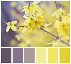 Yellow Color Combinations 167 Best Colour Purple U0026 Yellow Images On Pinterest Yellow