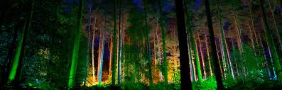 Fairy Lights In Trees by White Light At The Electric Forest White Light