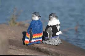 you know you want to knit a sweater for a penguin grist