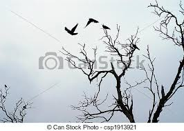 shadow of birds flying birds flying dead tree stock