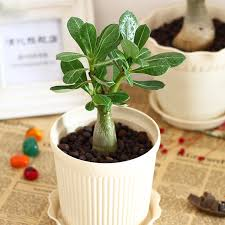 indoor plants singapore singapore flower shop florists singapore flowers gifts to