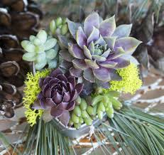 succulent wedding favors succulents for weddings wedding favors bouquets centerpieces