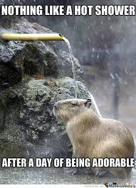 Otter Memes - otter memes best collection of funny otter pictures