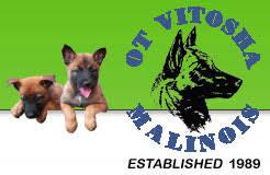 belgian shepherd kijiji belgian malinois puppies for sale