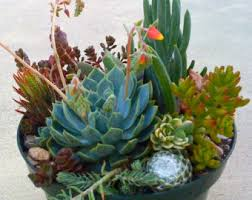 succulent terrarium diy succulent cuttings wedding