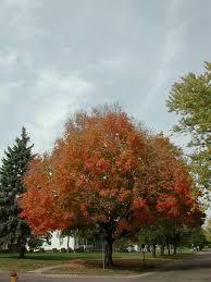 times places fall foliage iowa