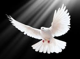 what does dove mean dove spirit animal wild gratitude