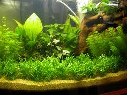 ghiaia per acquari club acquariologico erpetologico barese le piante in acquario