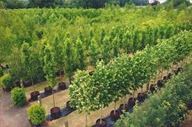 premier trees services