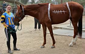 Dapper Halloween Costumes Horse Halloween Costume Ideas Saddle Seeks Horse