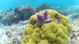 getting salty with cilsick 4 christmas tree worms youtube