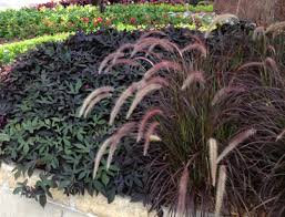 tough and beautiful ornamental grasses for the water wise garden