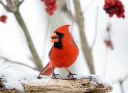 audubon u0027s 112th christmas bird count reigns as model for u201ccrowd