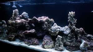Aquascaping Rocks Avoid These 5 Live Rock Aquascaping Pitfalls