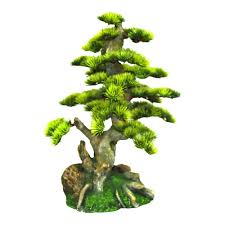 bonsai tree usa