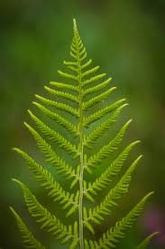 Free Picture Leaf Nature Fern Free Images Tree Nature Branch Leaf Flower Green Botany