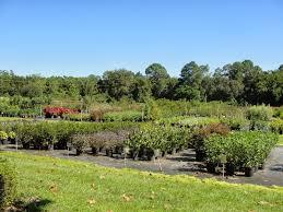 native plant nursery sunshine coast central florida gardener struthers nursery u0026 garden center