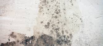 How Do You Get Rid Of Mold In A Basement by How To Remove Mold From Concrete Basement Walls Doityourself Com