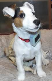 Quelle Race De Chien Choisir Test by Weenect Pets Test Complet De La Balise Gps Pour Chien