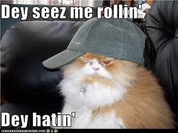 Lol Cat Meme - classic lolcat lolcats lol cat memes funny cats funny cat