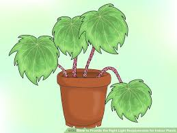 how to provide the right light requirements for indoor plants