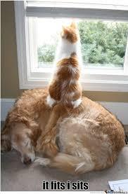 Cat Sitting Meme - cat sitting on a dog by galaxylurker meme center