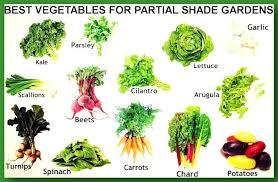 best garden vegetables to grow best idea garden