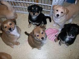 top 10 puppies making u0027adopt me u0027 faces of 2013 petfinder