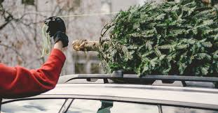 christmas tree delivery this dc startup will bring you a live christmas tree and set it up