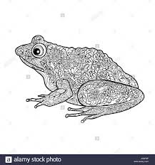 isolated frog stock photos isolated frog stock images alamy