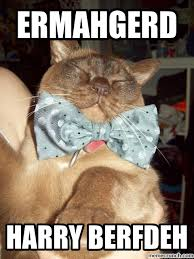 Ermahgerd Animal Memes - berfdeh cat