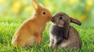 rabbit rabbit the meaning and symbolism of the word rabbit
