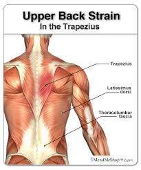 Human Body Muscles Images Trapezius Muscle Upper Back And Shoulder Pain