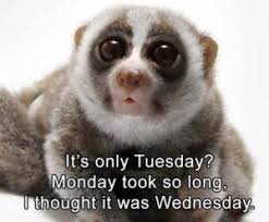 Tuesday Funny Memes - tuesday meme it s only tuesday meme funny happy tuesday meme