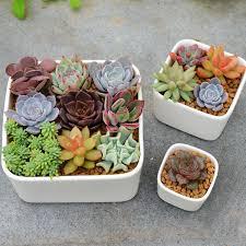 mini micro garden ornament white small bonsai pots planter ceramic