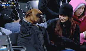 Boxer Meme - boxer wears blanket at baseball game gif weknowmemes