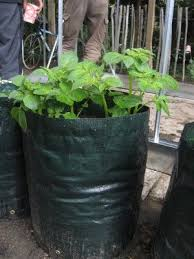 Container Gardening Potatoes - best 25 growing potatoes in bags ideas on pinterest diy grow