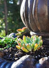 How To Make A Succulent Planter How To Make A Succulent Fountain California Grown