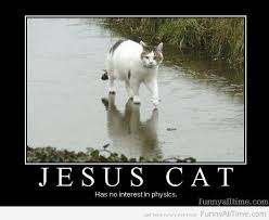 Jesus Cat Meme - jesus cat has no interest in physics funny all the time