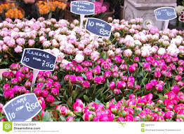 flowers for sale tulip flowers for sale stock photo image of europe purple 56627870