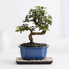 astounding inspiration real mini tree charming