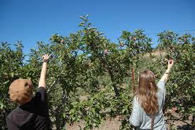 apple picking in julian jamelafamela