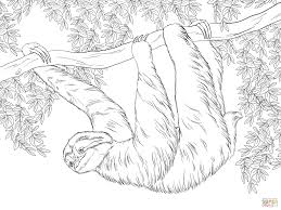 three toed sloth hanging on tree coloring page free printable