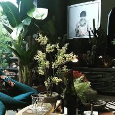 dark room with plants banana tree cactus ferns mimosa spot