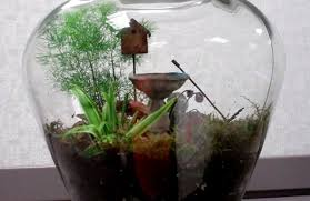 desktop gardens simple ideas for cool diy terrariums