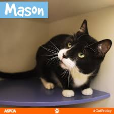 black friday pet adoption better than black friday don u0027t miss cat friday at the aspca