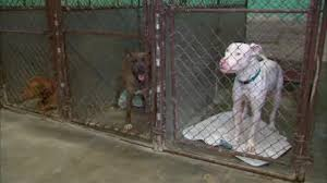 bronx u0027s only no kill animal shelter in danger of closing due to