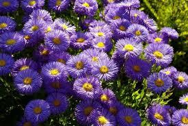 top 5 flowers for a fall garden ebay