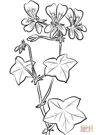 ivy leaf geranium coloring page free printable coloring pages